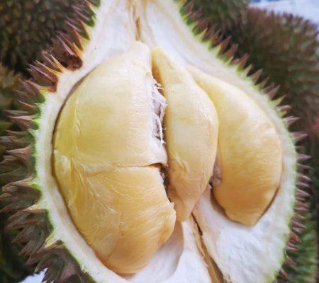 Durian Seller Singapore - XO Durian